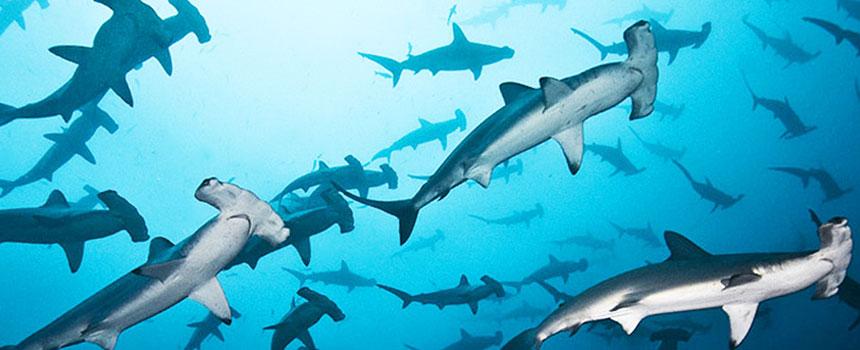 foto6-diving-costarica-hightravel